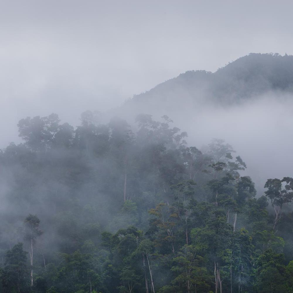 Mist in Borneo jungle.
