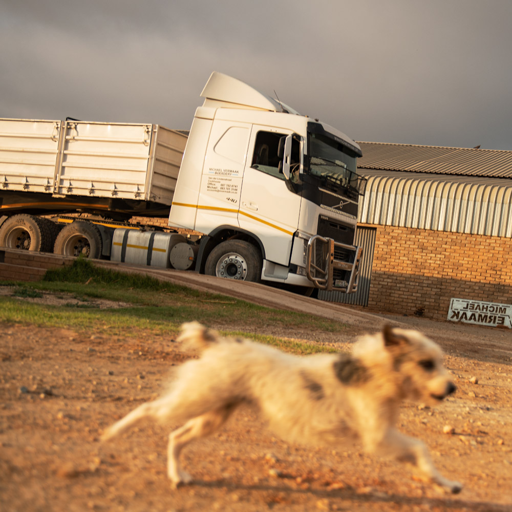 A small dog runs alongside a Volvo FH